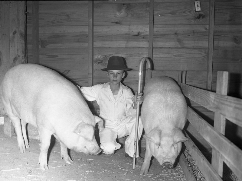 Reece Morrel Jr was a teenage pig farmer